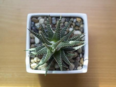 Plant, Pot, Succulent, Green, Botany, Growth, Potted