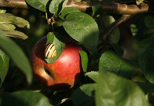 Apple, Fruit, Food, Eat, Snail, Shell, Branch, Doubt