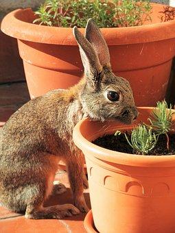 Rabbit, Looking, Stone, Pine, Seedling, Flower, Pot