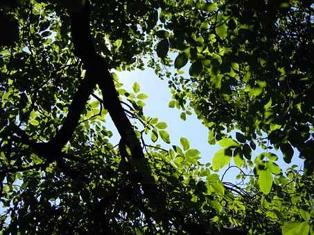 Tree, Leaves, Shadow, Summer, Light, Sheet And Shadow