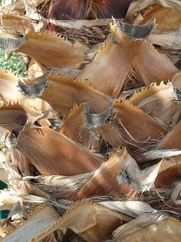 Palm Tree Root, Tribe, Palm, Leaves, Arid, Branches