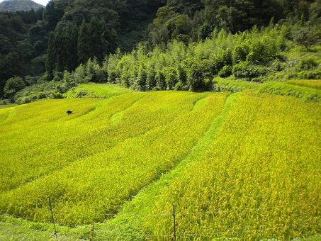 Japan, Landscape, Summer, Spring, Crop, Field, Worker