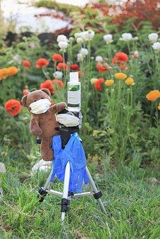 Bear, Mask, Corona, Closure, Brown, Grass, Flowers