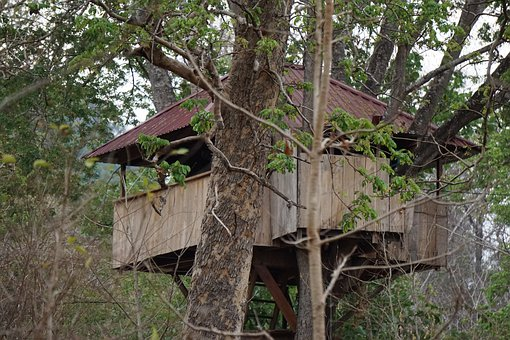Treehouse, Forest, Nature, Landscape, Wood, Trees