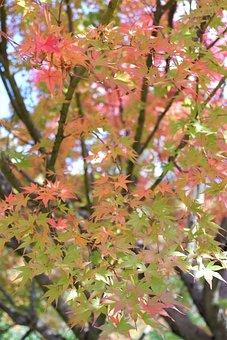 Fall, Leaves, Autumn