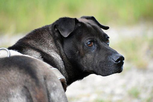 Dog, Animal, Portrait, Hybrid, Mixed Breed Dog