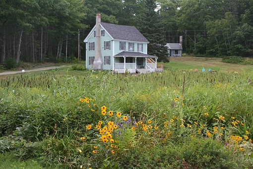 Wildflowers, Flowers, House, Nature, Maine, Guesthouse