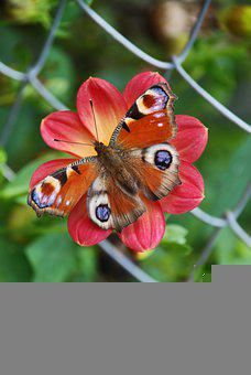 Nature, Flower, Butterfly, Red, Green, Macro