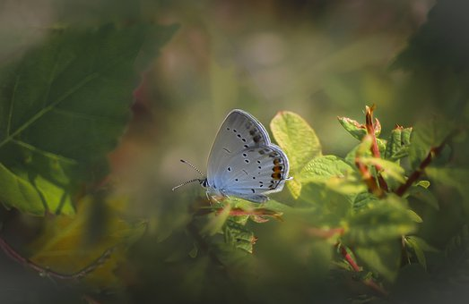 Butterfly, Insect, Nature, Macro, Summer, Wings