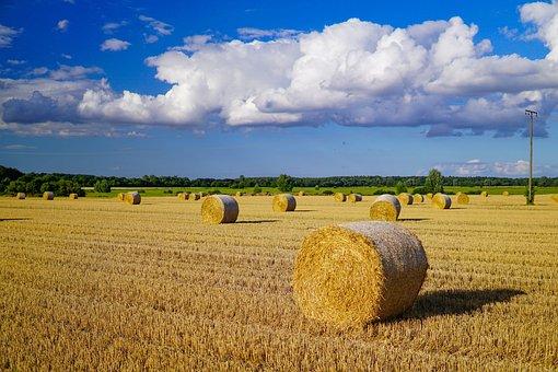 Bale, Field, Nature