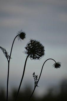 Silhouette, Plant, Gloomy