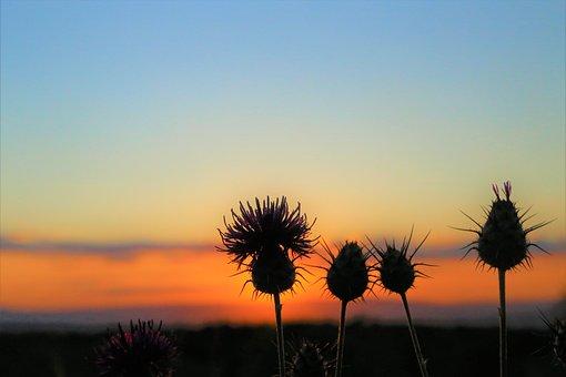 Sunset, Nature, Thorns, Dawn, Russet, Sky, Landscape