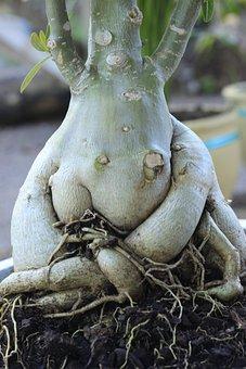 Plant, Roots, Soil