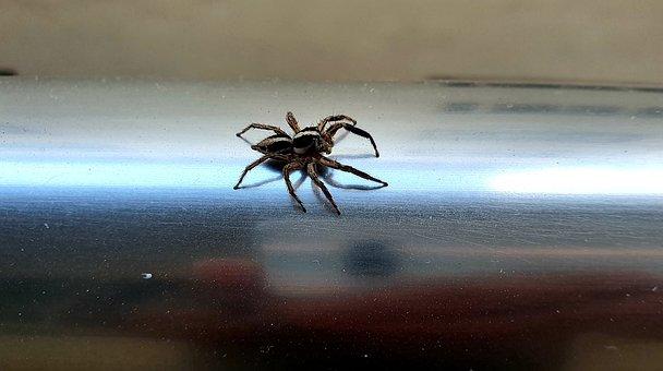 Spider, Metal, Shiny