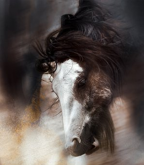 Horse, Portait, Head, In Motion, Swing, Mane, Movement