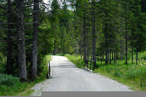 Forest, Trees, Adventure, Trail, Landscape, Nature