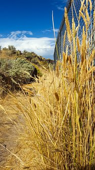 Grass, Yellow Grass, Yellow, Wire Fence, Path, Blue Sky