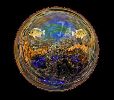 Fish, Aquarium, Water, Glass Ball, Bubble, Nature