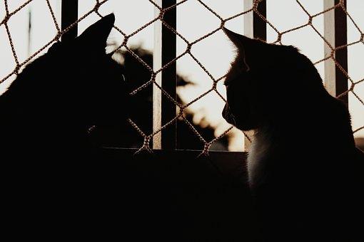 Cats, Animals, Feline, Shadow, Kitten, Adorable