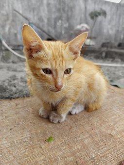 Cat, Pet, Kitten, Striped, Brown, Animals, Child, Cute