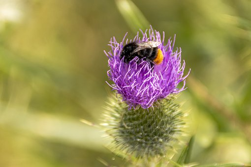 Nature, Insect, Bumblebees, Wing, Animal World