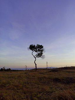 Tree, Sky, Nature, View, Landscape, Hill, Morning