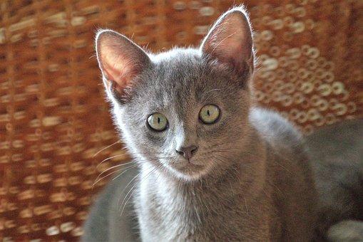 Animal, Cat, Pet, Feline, Colombia