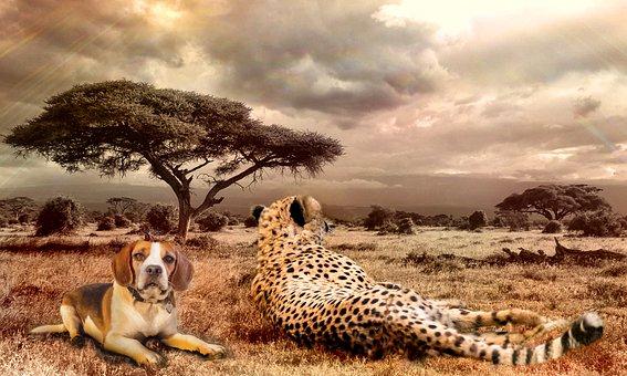 Savannah, Africa, Cheetah, Beagle, Composition