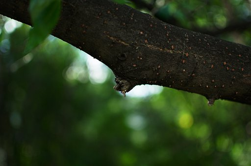 Branch, Twig, Background Of Green Foliage, Botanical