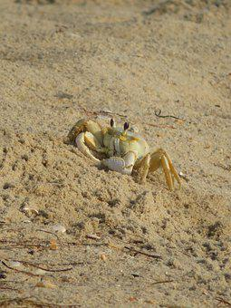 Crab, Beach, Sand, Ocean, Sea, Summer, Nature, Water