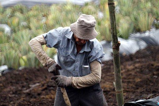 Man, Farmer, Worker, Farming, Colombia