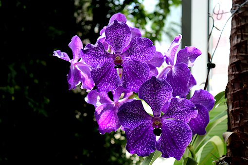 Orchid, Exotic, Flowers, Flowering, Garden, Tropical