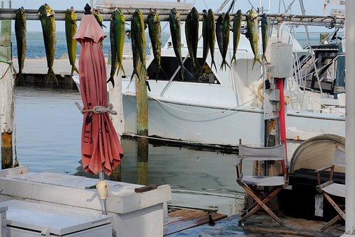Boat, Fishing, Fishing Boat, Fresh Catch