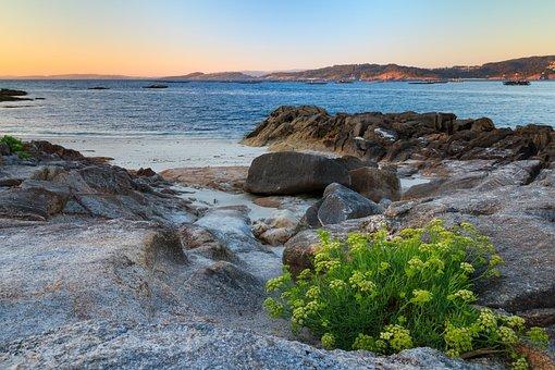 Sunset, Galicia, Ria, Aldán, Flowers, Sea, Beach, Calm