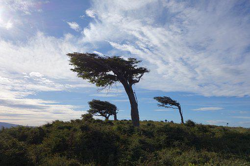 Trees, Nature, Grass, Mountain, Argentina, Patagonia