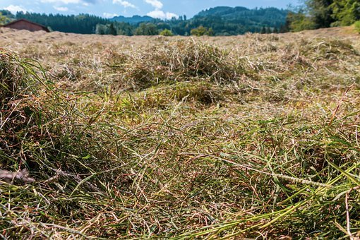 Hay, Grass, Dry, Agriculture, Field, Nature, Landscape