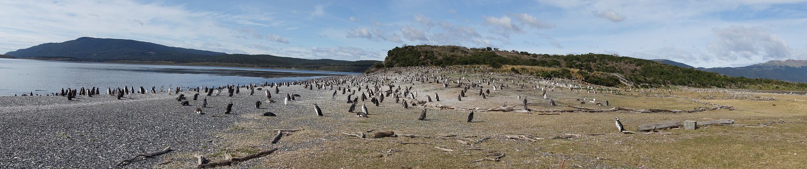 Argentina, Patagonia, Nature, Penguins, Panorama