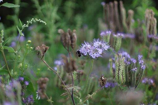 Flower Meadow, Biodiversity, Wild Flowers, Nature