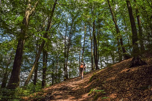 Mountain, Hiker, Nature, Away, Forest, Path, Landscape