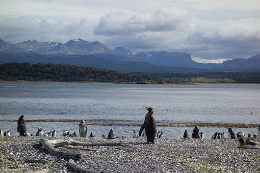 Penguins, Water, Nature, Argentina, Patagonia, Sea