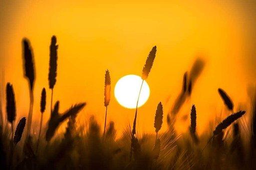 Sunset, Beach, Outdoor, Sea, Sky, Sunrise, Ocean
