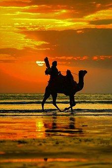 Camel, Sunset, Sky, Beach, Outdoor, Sea, Sunrise