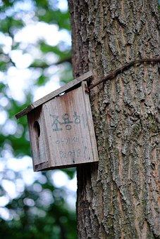 Wood, Nest Box, Bird House, Forest, Environment