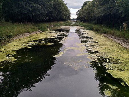 Water, Algae, Channel, Nature, River