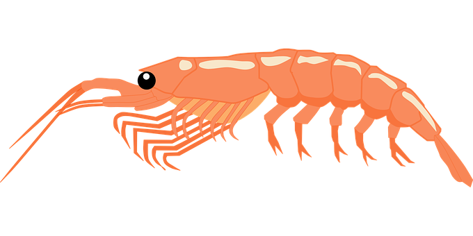 Shrimp, Aquatic, Orange, Sea, Sea Animal, Animal