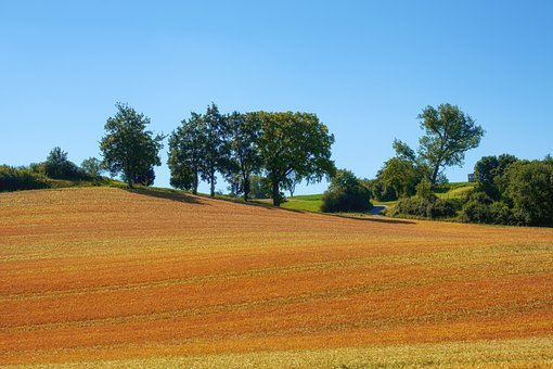 Field, Cereals, Grain, Wheat, Agriculture, Arable
