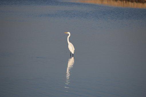 Bird, Sanctuary, Morning
