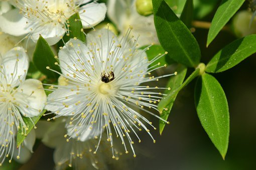 Flower, Insect, White, Spring, Bloom, Garden, Blossom