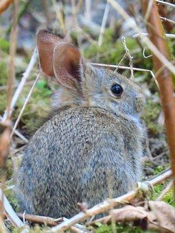 Animal, Wildlife, Rabbit, Nature, Mammal, Brown