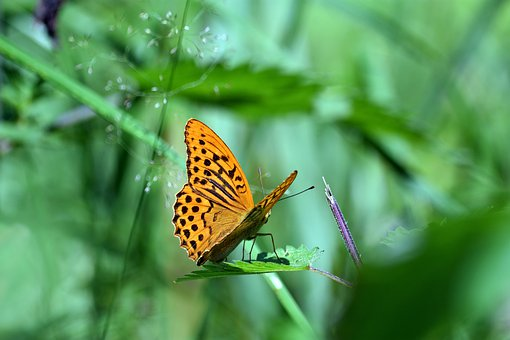 Butterfly, Insect, Wing, Macro, Summer, Beautiful